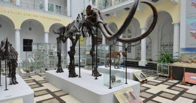 Mamut włochaty, Muzeum Geologiczne w Warszawie. Szkielet, wystawa