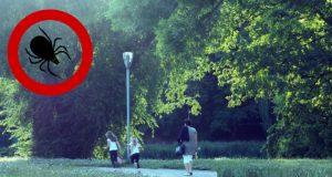 Dzieci biegnące ścieżką w parku i kleszcz w tle jako symbol zagrożenia boreliozą. Borelioza