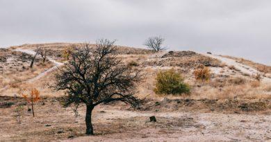 Schnące drzewa i krzewy na zboczu wzgórza