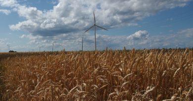 Krajobraz: pole dojrzałej, złotej pszenicy, na horyzoncie wiatrak, niebieskie niebo pełne wyrazistych chmur