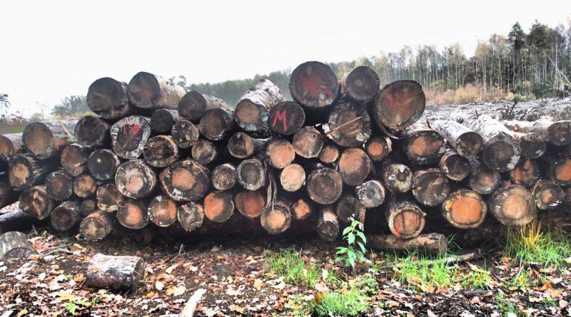 ścięte drzewa na tle poręby